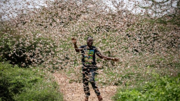 Ministry  Tells Farmers Not to Panic Over Locusts