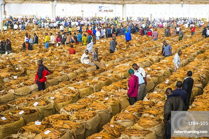 Malawi's Tobacco Market to Open April 25