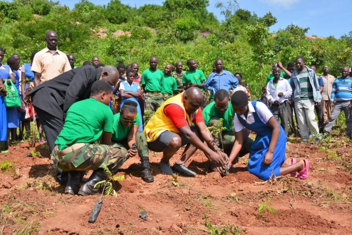 Lilongwe Residents Urged to Take Care of Trees
