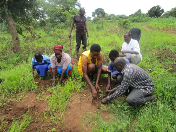 Bwaila Lions Club Plant Over 4,000 Trees