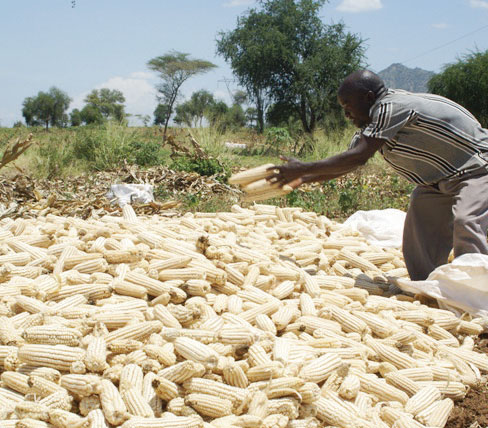 ADMARC Set To Buy Over 900,000 Metric Tons of Maize from Wednesday
